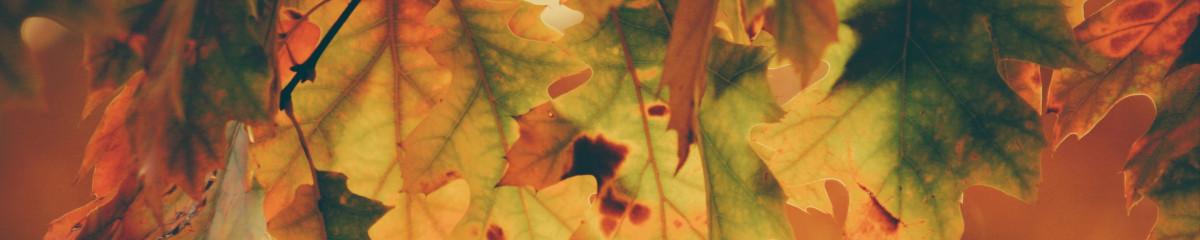 Playlist image September 1, 2021: Meteorological beginning of autumn