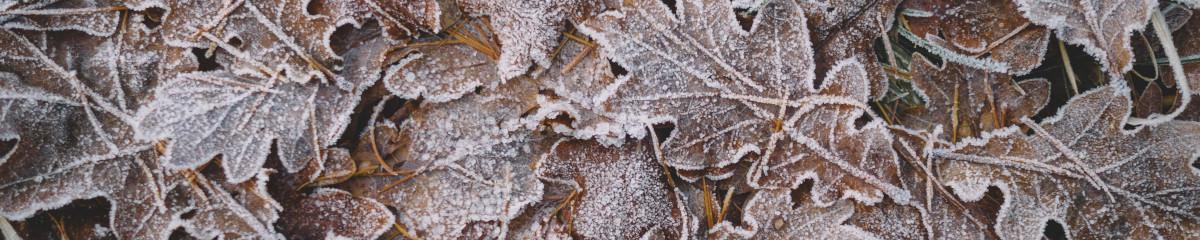 Playlist image Cold Season